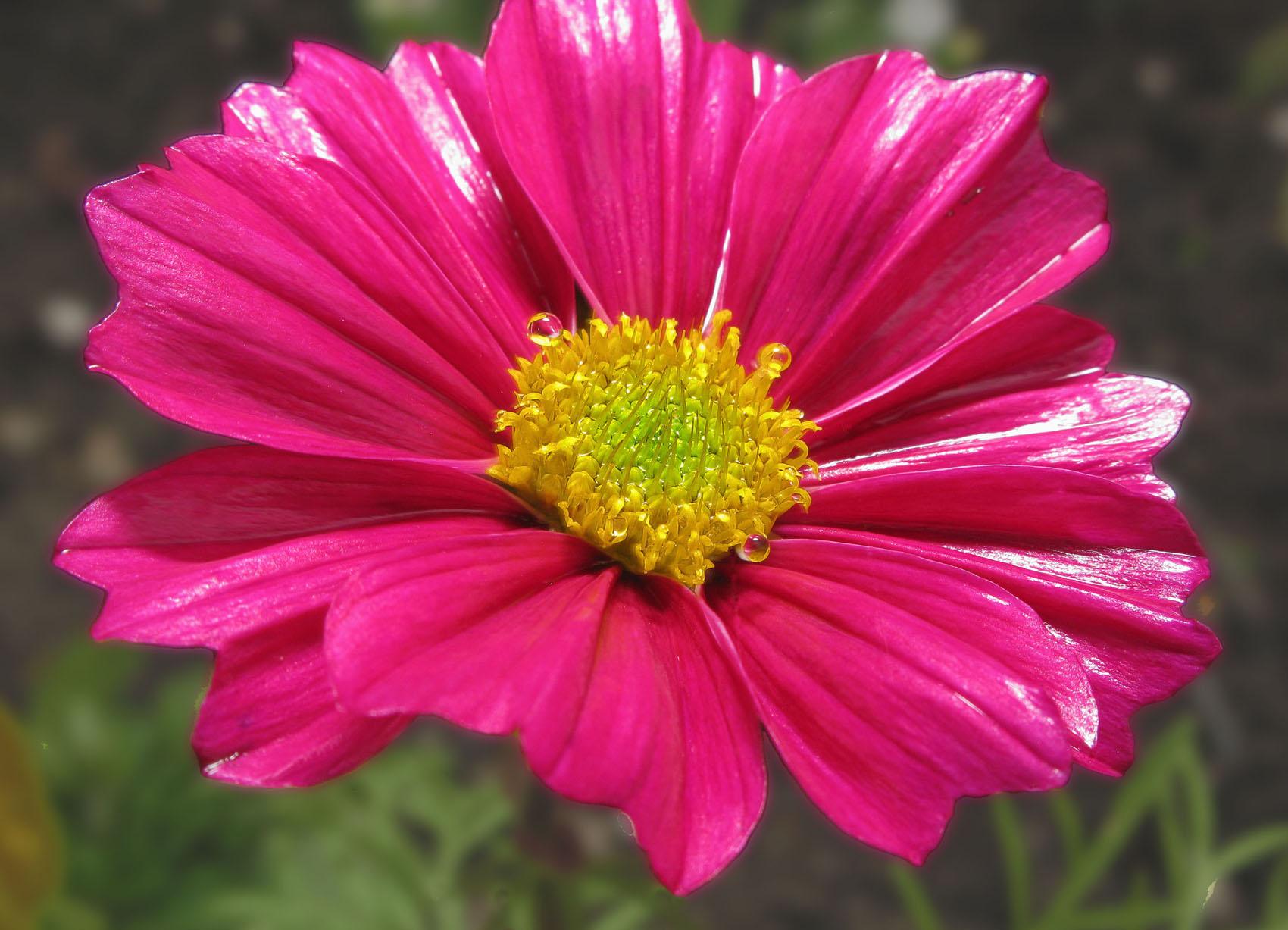 Flower Canon G9